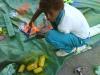 bloemen-maken-van-vuilnis13-jpg